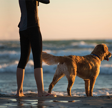 OUTING PROVIDES POSITIVE CHANGES IN YOUR DOG'S ATTITUDE.